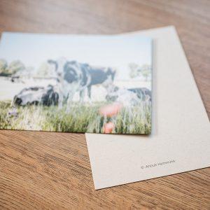 De koeienkaarten – set van 6 kaarten